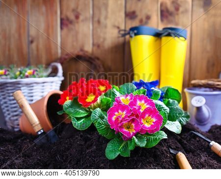 Gardening Tools And Flowers On The Garden Terrace. Planting Flowers In The Spring In The Garden At H