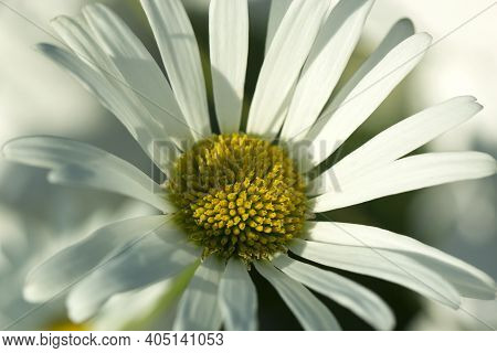 Flower Macro Shot, Abstract Photo Of A  White Flower