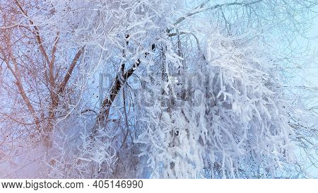 Snow And Hoarfrost On The Branches Of Trees Against The Blue Winter Sky. Beautiful Winter Background