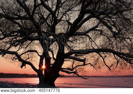 Dreamlike Landscape Photo With A Silhouette Of A Huge Old Naked Tree On The Shore Of Frozen Snowy La