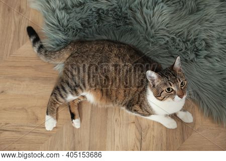 Cute Cat Resting On Warm Floor At Home, Top View. Heating System