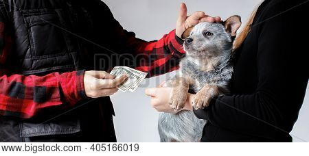 The Scene Of Selling A Dog Puppy For Money. Person Has Found A New Friend And Petting A Pet. Dog Bre