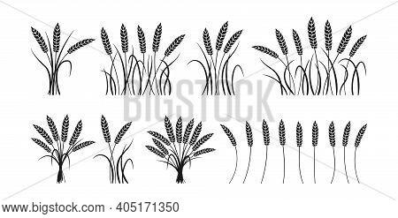 Wheat Ears Black Silhouette Set Sheaf Bunch Vector