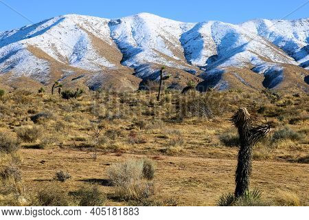 Arid Field With Sage Plants And Joshua Trees Surrounded By Snow Covered Rural Hills Taken At The Moj