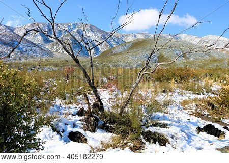 Burnt Chaparral Plants Caused From A Past Wildfire Surrounded By Snow With A Rural Mountain Range Be