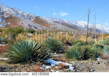 Yucca Plants Amongst Chaparral Shrubs Surrounded By Snow On Arid Badlands Besides A Mountain Range T