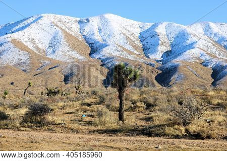 Joshua Trees And Chaparral Shrubs On An Arid Field Surrounded By Barren Snow Covered Hills Taken At