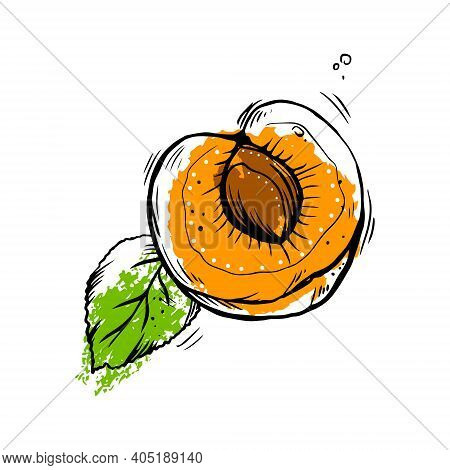 Half An Apricot With A Stone And A Leaf. Vector Hand Drawn  Illustration.