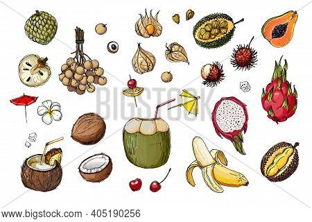 Fruits From Thailand. Food Sketch Lines. Coconut, Pitaya, Physalis, Cocktail, Drinking Coconut, Umbr