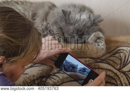 Woman Takes Picture On Her Smartphone Of Her Sleeping Cat. Gray Seventeen-year-old Cat Sleeps Off Th