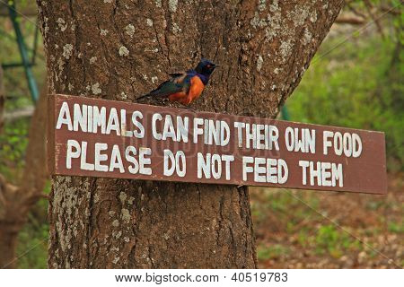 Do Not Feed Animals Sign And Bird