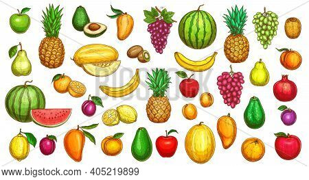 Fruits Sketch Icons, Tropical Exotic Farm Harvest, Vector Hand Drawn. Color Sketch Fruit Pineapple,