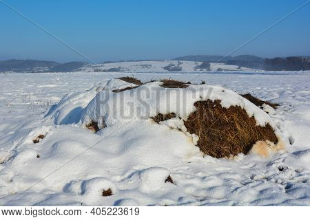 A Dung Heap With Snow In The Wild And Blue Skies