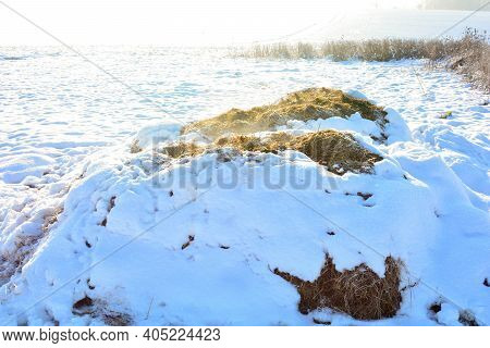 A Dung Heap With Snow In The Wild, In The Sunlight