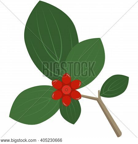 Barberry, Red Bilberry Or Cowberry On Brunch Vector Icon