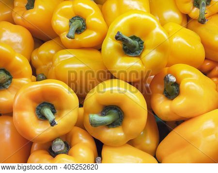 Fresh Yellow Paprika Peppers Farm Harvest. Sweet Peppers Capsicum Background. Harvesting.