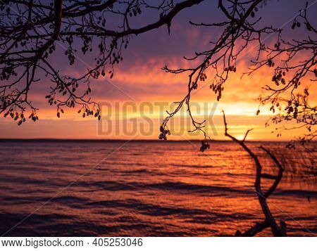 Enchanting Sunrise On The Lake With Silhouettes Of Alder Branches