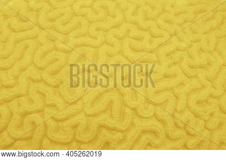 Abstract Background In Illuminating Yellow Color   - Organic Texture Of Hard Coral , Colors Of The Y