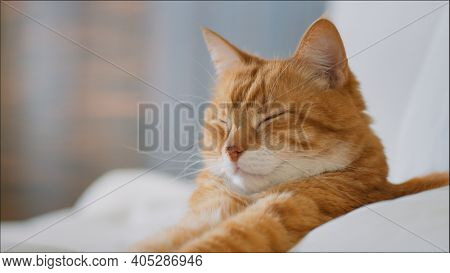 Sleeping cat in bed close-up
