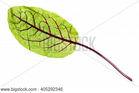 Single Fresh Leaf Of Green Chard Leafy Vegetable (mangold, Beet Tops) Isolated On White Background