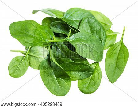 Pile Of Fresh Green Leaves Of Spinach Leafy Vegetable Isolated On White Background