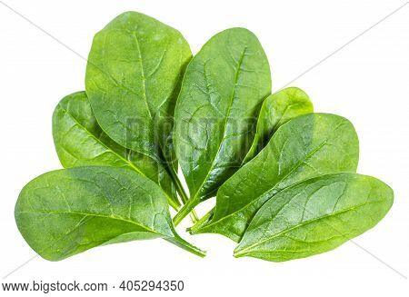 Several Fresh Green Leaves Of Spinach Leafy Vegetable Isolated On White Background