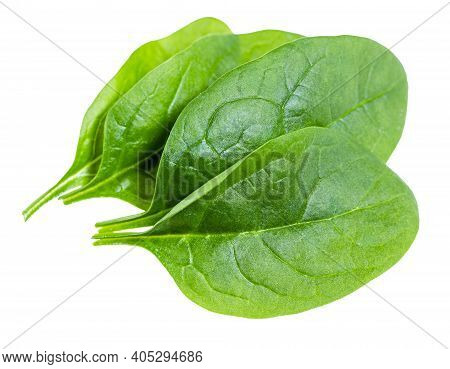 Few Fresh Green Leaves Of Spinach Leafy Vegetable Isolated On White Background
