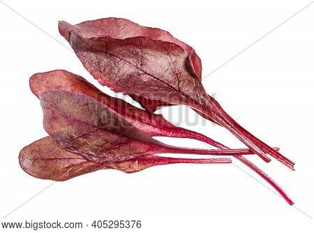 Few Fresh Leaves Of Red Chard Leafy Vegetable (mangold, Beet Tops) Isolated On White Background