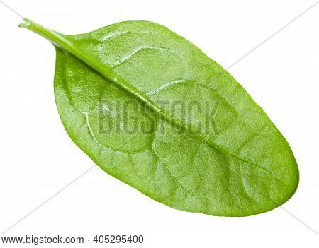 Single Natural Green Leaf Of Spinach Leafy Vegetable Isolated On White Background