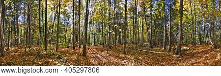 Panoramic View Of The Natural Parkland Forest In Fall