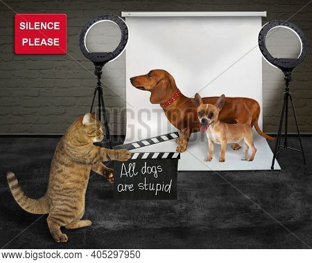 A Beige Cat Director In The Set Makes Movie Called All Dogs Are Stupid.