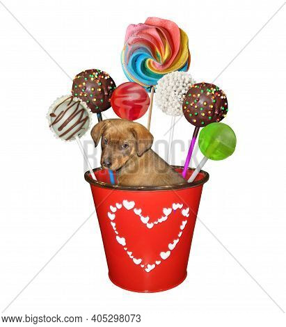 A Beige Puppy Is Inside A Red Metal Pail With Sweets. White Background. Isolated.