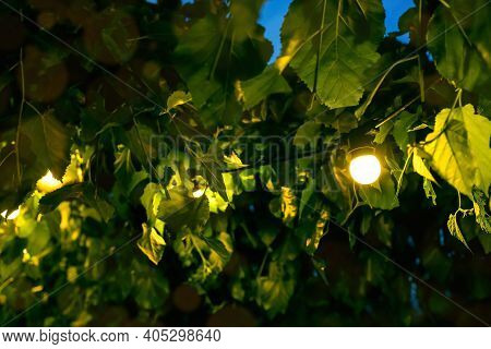 Illumination Festive Light Garden With Electric Garland Bulbs Of Warm Light On Tree Branches Evening