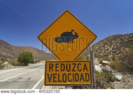 Black And Yellow Traffic Sign Warning Of Chinchilla In The Road And Telling To Reduce Speed, Chinchi