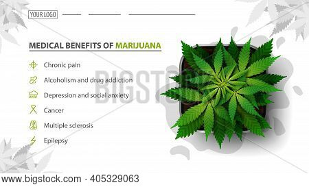 Medical Benefits Of Marijuana, White Baner For Website With Bush Of Cannabis In A Pot, Top View. Ben