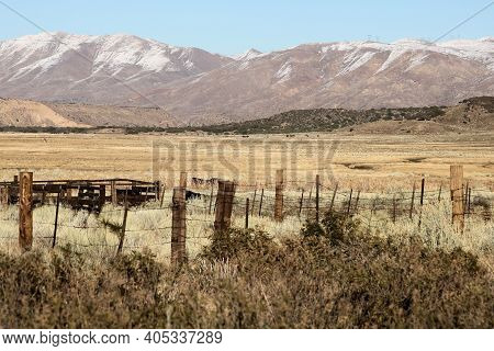 Livestock Grazing Grasslands Surrounded By Rustic Wooden Fences And Snow Capped Mountains Beyond Tak