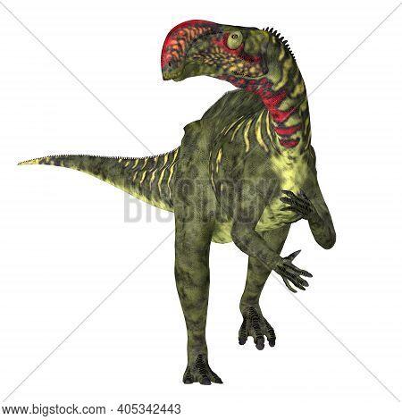 Altirhinus Dinosaur Front 3d Illustration - Altirhinus Was A Duck-billed Iguanodon Herbivorous Dinos