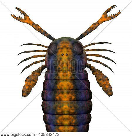 Pterygotus Scorpion Head 3d Illustration - Pterygotus Sea Scorpion Was A Carnivorous Marine Fish Tha