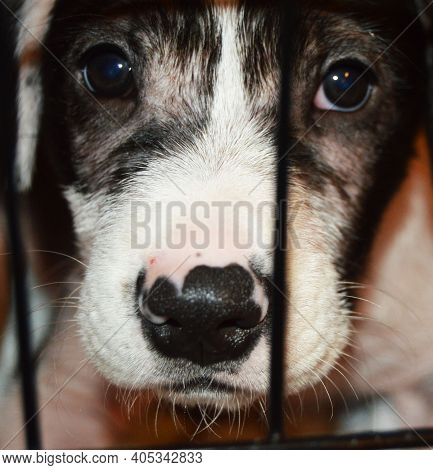 Black And White Puppy Dog Behind Crate Cage