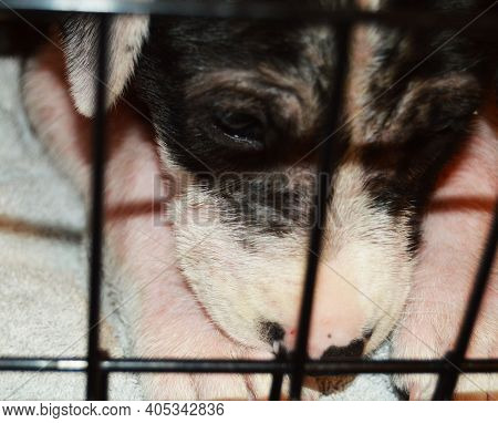Black And White Puppy Dog Behind Crate