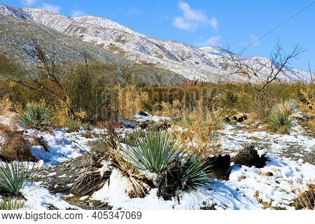Chaparral Shrubs Including Yucca Plants On The High Desert Plateau Besides Barren Mountains Surround