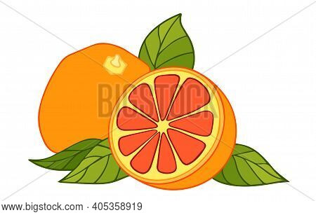 Grapefruit Vector Drawing. Summer Fruit Color Illustration. Isolated Hand Drawn Whole And Half Citru