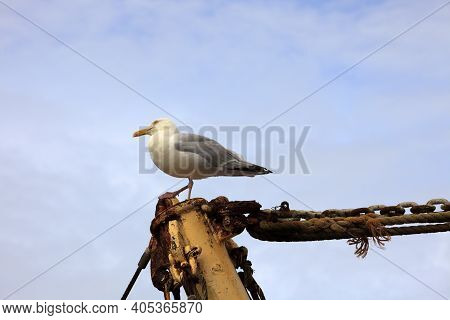 Donegal (ireland), - July 20, 2016: A Gull On A Wood Pole, Co. Donegal, Ireland