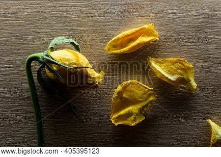 Faded Yellow Rose And Wither Petals On Wooden Background