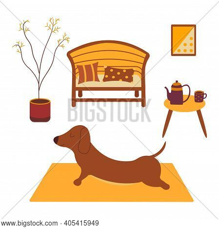 Dachshund Practices Yoga Back Bending On Yoga Mat. Yoga Dog, Relaxation And Sports. Table With Kettl