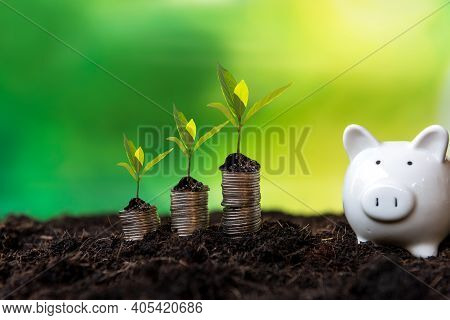 Piggy And The Tree  Growing On Money Coin Stack For Investment And Saving Green Nature Background.