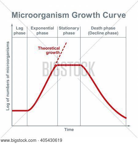 Microorganisms Growth Curve. Ideal Kinetic Curve Of A Static Culture Of Microorganisms, Such As Bact