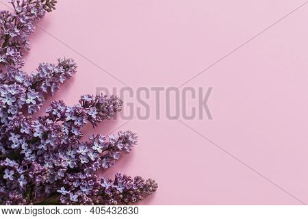 Lilac Flowers On Pink Paper, Stylish Spring Flat Lay. Floral Greeting Card With Space For Text