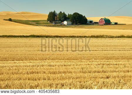 Red Barn And Cut Wheat Fields. Red Barn In Sunshine Amid Cut Fields In The Palouse. Washington State