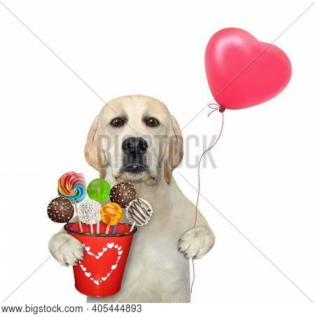 A Dog Holds A Red Pail With Sweets And A Heart Shaped Balloon. White Background. Isolated.